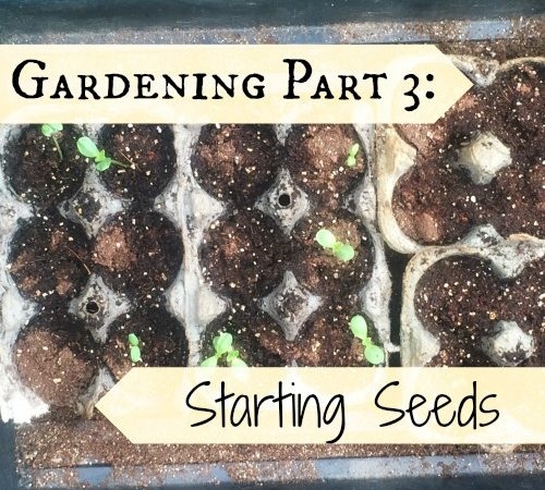 Gardening Part 3: Starting Seeds